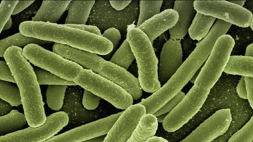 Una bacteria que causa gangrena ayudaría a combatir el cáncer cuando otros métodos fracasan