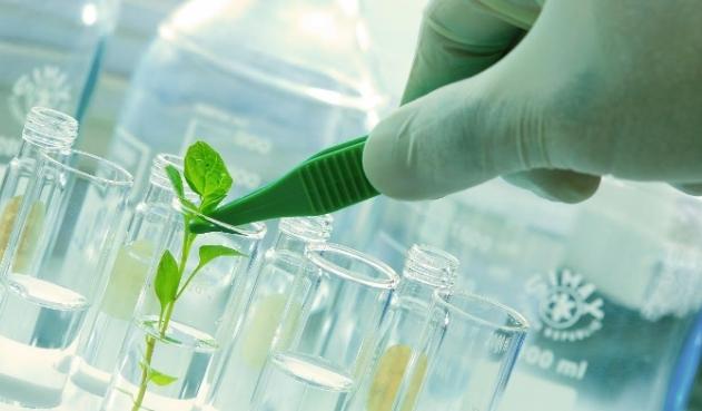 Científicos mutan toxina de alacrán para inhibir tres tipos de cáncer