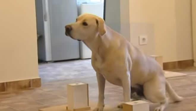 Blat, el perro que detecta de forma precoz el cáncer de pulmón