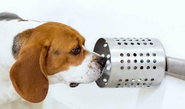 Los perros podrían detectar con precisión el cáncer