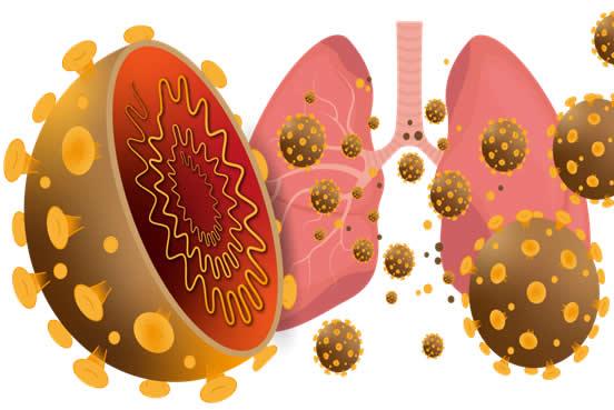 pulmon coronavirus
